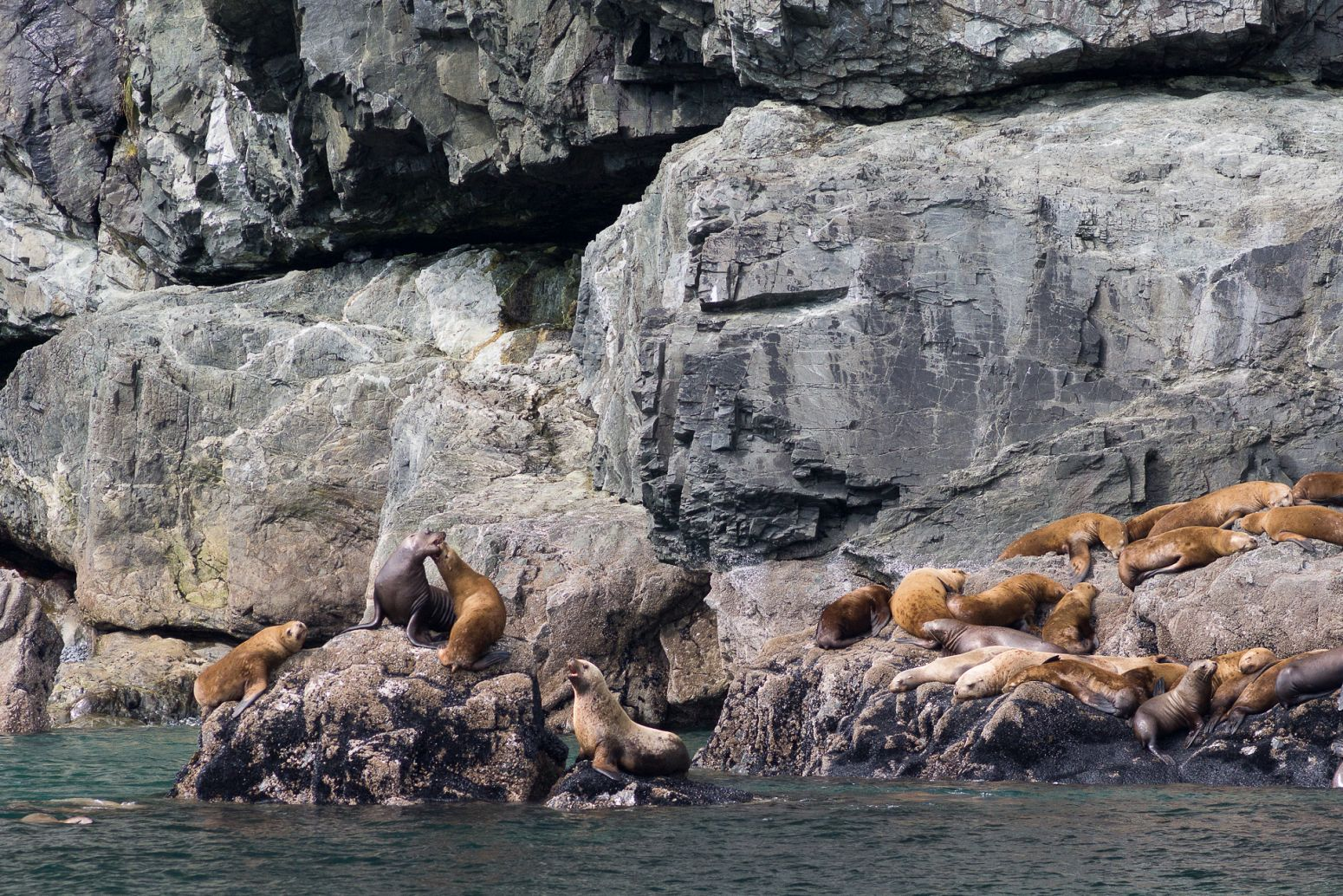 Sea lions colony in Prince William Sound, Alaska, USA