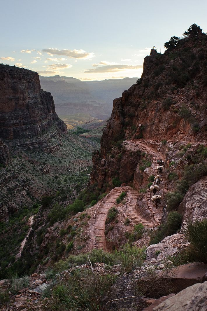 Mules on the Bright Angel Trail, Grand Canyon NP, Arizona, USA