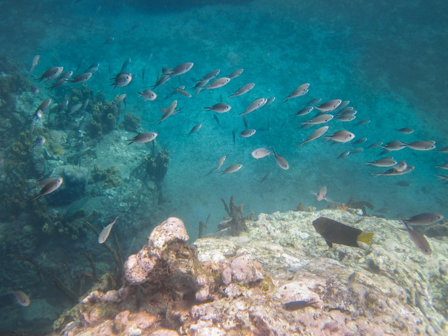 Snorkeling near Jacques Cousteau's Underwater Reserve, Guadeloupe.