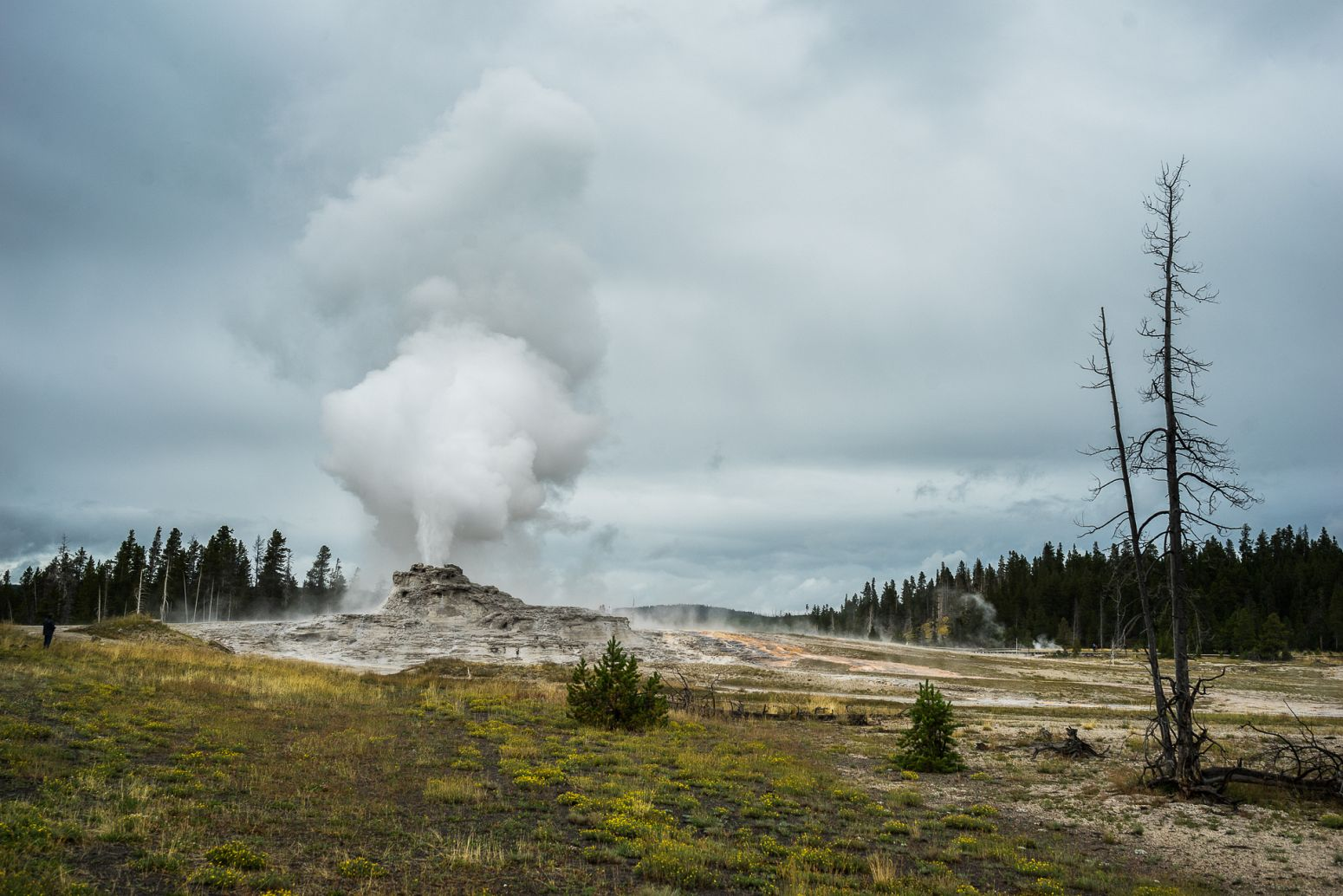 Castle Geyser, Yellowstone NP, Wyoming, USA