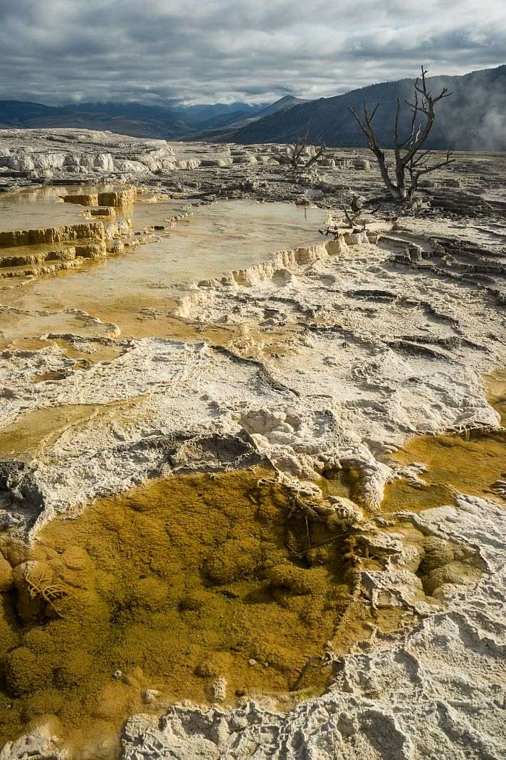 Mammoth terraces, Yellowstone NP, Wyoming, USA