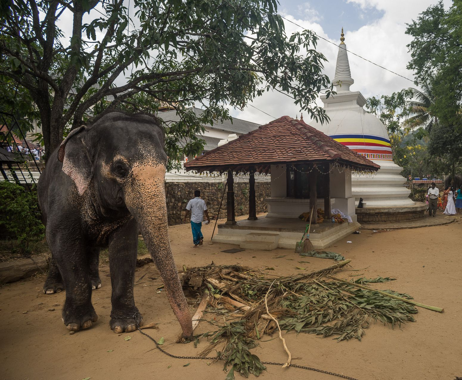An elephant inside the Kandy Tooth Temple before the Perahera festival, Kandy, Sri Lanka