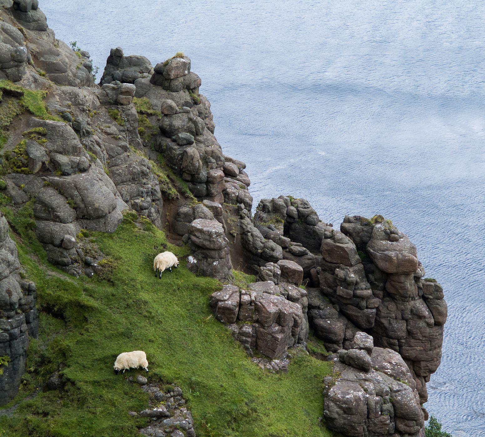 Sheeps on a cliff on Isle of Skye, Scotland