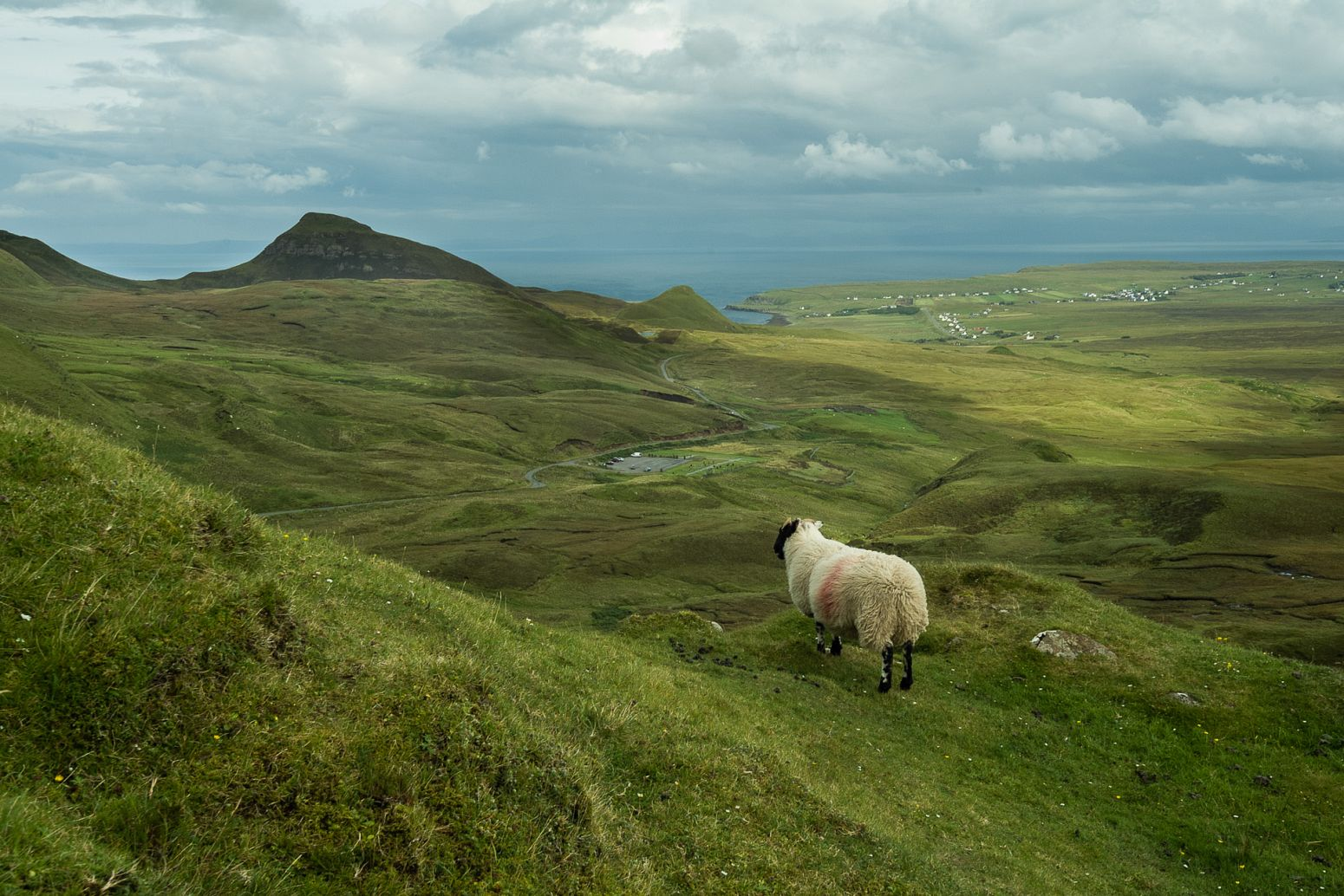 Contemplating sheep, Isle of Skye, Scotland