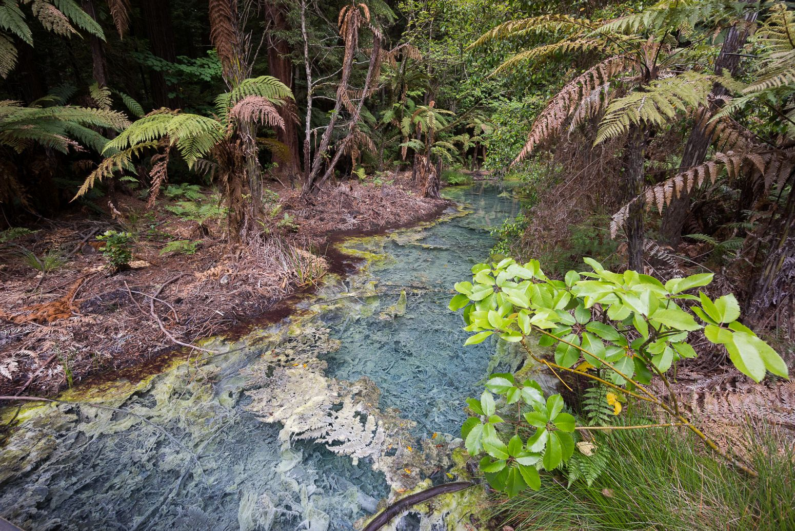 Beautiful pond inside the Redwoods Whakarewarewa Forest, Rotorua, New Zealand